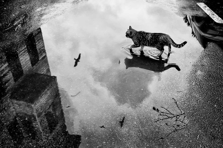 http://ziyouz.uz/wp-content/uploads/2014/04/cat-in-the-rain.jpg