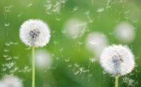 http://n.ziyouz.com/images/allergies.jpg